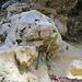 Molasse trifft Nagelfluh am geologischen Lehrpfad. Oben auf einer Schautafel erfährt man, dass der Bodensee mal bis Chur reichte