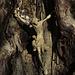 Am Gipfelkreuz in einem hohlen Baumstamm entdeckt / Visto in cima in un tronco di un albero