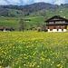 Frühlingswiese in Giswil