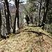 typischer Bergrücken im Jura