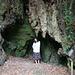 Eindrückliche Wurzeln im Laurasilva Wald