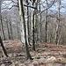 Kleč - Blick unweit des Gipfel entlang der steilen, nordwestlichen Hänge. Unten im Tal ist mit sehr viel Fantasie Kostomlaty und Umgebung zu erahnen.