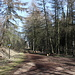 """U velké jedle - Gerade haben wir die Wegkreuzung erreicht. Hier treffen wir auch auf den blau markierten Wanderweg, der zurück zu unserem Ausgangspunkt """"Pod Březinou"""" führt. Im Rückblick ist auch das Waldsträßchen (Radweg Nr. 231) zu sehen, welchem wir (nach unserem Umweg über den Kleč) soeben kurz gefolgt sind."""