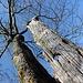 Kamenný vrch - Auch hier gibt's wieder verschiedenste Bäume. Zum Beispiel ziemlich alte. Und noch ältere.