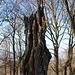 """Kamenný vrch - Auch hier ist wieder Fantasie gefragt: Noch immer wird der """"Ausblick"""" durch die Umgebung von Teplice sowie den Kamm der Krušné hory (Erzgebirge) dominiert. Und natürlich von Bäumen."""