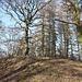 Kamenný vrch - Die nahegelene  südwestliche Gipfelkuppe ist offenbar zwar etwas höher als die nordöstliche. Dafür gibt es hier aber einen trigonometrischen Punkt.