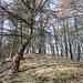 """Im Aufstieg zum Stříbrný vrch - Als letzten """"Gipfel"""" für heute besuchen wir den nur wenig abseits des Wanderweges gelegenen """"Silberhügel"""".<br />"""