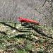 die rote Bank, ideal für eine Mittagspause