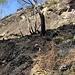 Feuerrodung in Ponte Brolla