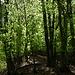 Aufstieg durch den Wald.
