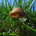 Pilzzeit / tempo dei funghi!