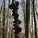 Unheimliche Baumwesen