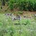 Ruinen mit Val Morabbia