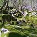 Muschio che ricopre rocce e massi disseminati sul sentiero.