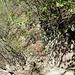 schmaler Pfad am Fels entlang. Danben geht es steil abwärts