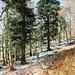 der kürzliche Wintereinbruch brachte noch etwas Schnee