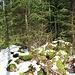 auf der Suche nach dem Tête à l'Ours im dichten Unterholz