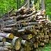 Holzstapel...