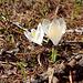Der Frühling zieht ins Land