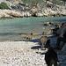 zurück an der Calanque-Bucht Port Pin, hier waren seltsamerweise einige Badegäste zwischen den Wildschweinen am Strand.  Unsere Rucksäcke waren besonders interessant,