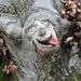 Grottesca scolpita nel tronco di un faggio