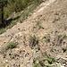 Gleich nach dem Einstieg in die Fallätsche-Traverse: der Schuttkegel unterhalb der Teehütte, der schräg nach links aufsteigend passiert wird.