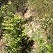 Im Frühling gut sichtbar: die Pfadspur im lichten, nördlichen Teil des Erosionstrichters.