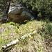 Die kleine Höhle in der Mitte zwischen Traverse und Grat. Hier findet sich das Fallätsche-Büchlein.
