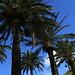 Palmen hat es hüben und drüben