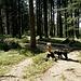 Holzschnitzereien begleiten einem auf dem Weg