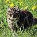 Ein Katze schleicht sich an. Sie war netter als ihr Blick andeutet.