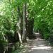 schöner Weg entlang des Canal de Versoix