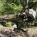 Walddynamik 2