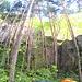 Der alte Klettergarten in Gueberschwir