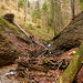 Schwemmholz erleichtert die Stufen im Flussbett massiv