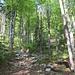 ausgetrocknetes Bachbett im erfrischenden Wald