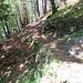 angenehmer Waldboden