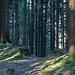 Im Wald unterhalb von P.1083
