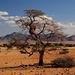 Baum mit großem Nest