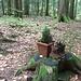 Kunst im Wald! Topfpflanzen unter ihren wilden Artgenossen