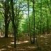 Da Robustello il 99% del sentiero è nel bosco