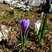 Frühlingserwachen....