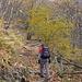 Salita nel bosco su largo e comodo sentiero...