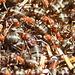 Attività sul formicaio.