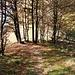 Kurz vor dem Aufstieg (ca. 45 Hm) zum Cima dei Torrioni in herbstlich gefärbtem, lichtem Wald