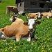 Das wäre dann wohl hier, bei den Kühen mit den schönen Hörnern