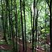 Frühlingshafter Wald, durch den die Sonne drückt