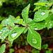 Benetztes Grün