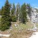Die Gipfelfelsen vom Gummesel / Tête de l'Ane (1900m). Ich versuche es zuerst in der Mitte, musste dann aber wegen tiefen Karstrinnen nach links ausweichen.