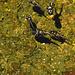 Kaulquappen leben in der Brühe